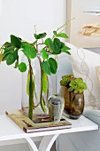 Foliage plants in various vases on white side table