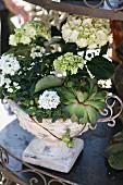 Planted arrangement in urn