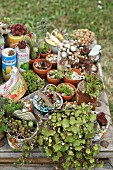 Succulents planted in tin cans on old wooden table