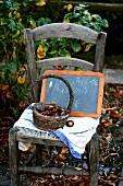 Rustikaler Stuhl mit Esskastanien in kaputtem Körbchen