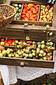 Wooden drawers filled with cucamelons, Chinese lanterns and sorb apples (Sorbus domestica, also known as service tree or whitty pear) on an autumn market stall