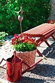 Red arrangement with wooden bench, watering can and planter on gravel garden terrace
