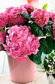 Pink hydrangea in pink ceramic vase