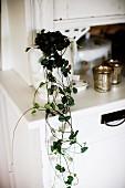 Hängepflanze in Porzellankrug auf weißem Buffetschrank