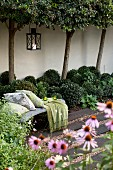 View past echinaceas to bench with cushions in courtyard with row of trees against wall
