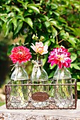 Dahlias in glass bottles in wire basket