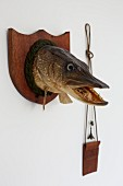 Angling trophy next to neck pouch hung on wall