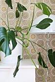 Philodendron and standard lamp with white metal lampshade against wallpaper with graphic, floral retro pattern