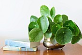 Foliage plant in retro brass pot and books on bedside table