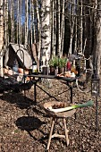 Primitive camp with vintage ambiance in autumn birch woods