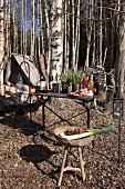 Ursprüngliches Campen im herbstlichen Birkenwald mit Vintage Flair