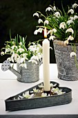 Snowdrops in various zinc containers