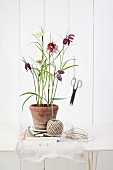 Snake's head fritillaries and ball of string on table