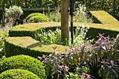 Low, curved hedges in sunny garden