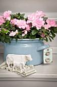 Rosa blühende Azalee in hellblauem Emailletopf gepflanzt, davor weisse Keramik Kuhfiguren