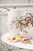 In Zuckerdose gepflanzte, rosa gesprenkelte Pflanze 'Pink Splash', davor Plätzchen auf Serviette