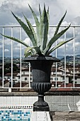 Agave planted in black urn on edge of roof terrace pool with view of Florence cityscape