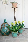 Cowslips in turquoise flowerpots next to old blue bottle in macramé net in front of antique, iron plant stand with sempervivum in terracotta pot