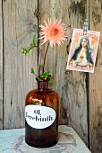 Salmon pink dahlia in vintage apothecaries' bottle on pale green table, nostalgic postcard of the Madonna stuck on board wall
