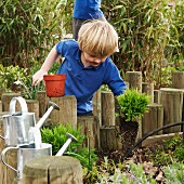 School boy removing plant from pot in garden