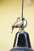Bird ornament sitting on black, retro pendant lampshade