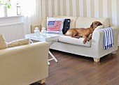 Sleeping dog and Stars and Stripes scatter cushion on pale sofa set