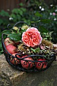 Metal basket of apples, chestnuts & nostalgic rose of the variety 'Chippendale'