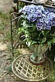 Blue-flowering hydrangea on metal garden chair