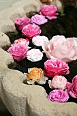 Different roses floating in basin of stone fountain