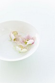 Flowers in water bowl on table