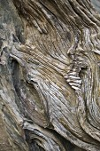 Detail of weathered piece of wood