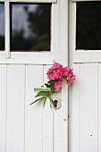 Pink phlox flowers on door handle of white, vintage entrance door