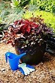 Ceramic pot of plants with decorative red leaves