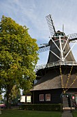 Restored windmill and magnificent chestnut tree in late summer atmosphere