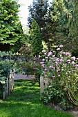 Rustic, summery garden with open garden gate