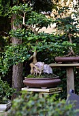 Bonsai tree in brown bowl in garden