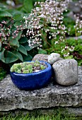 Succulents in blue ceramic pot and cobbles on stone flag