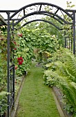 Black, metal arched trellis over garden path