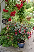 Potted fuchsia and dark red rose in bed with stone surround
