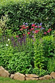 Flowering plants in bed with stone surround in summery garden