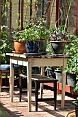 Potted herbs on vintage garden table