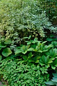 Various foliage plants in densely planted garden