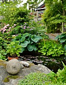 Lily pond with boulders on shore and margins planted with a wide variety of plants