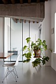 White classic chair and house plant in front of glass sliding door in renovated loft apartment with concrete girder and resin floor