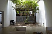 Bench and eucalyptus trees in courtyard with concrete tiles