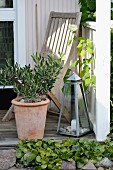 Small olive tree in terracotta pot, candle lantern and teak chair on veranda