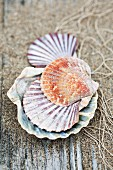 Scallop shells, sand and fishing net on rustic wooden surface