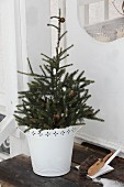 Smalll Christmas tree in white ornate pot on wooden step next to dustpan and brush