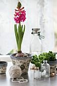 Hyazinthen und frische Kräuter mit Flaschen und Garnrolle auf dem Küchentisch