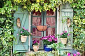 Window shutters decorated with old clogs, potted roses and geraniums